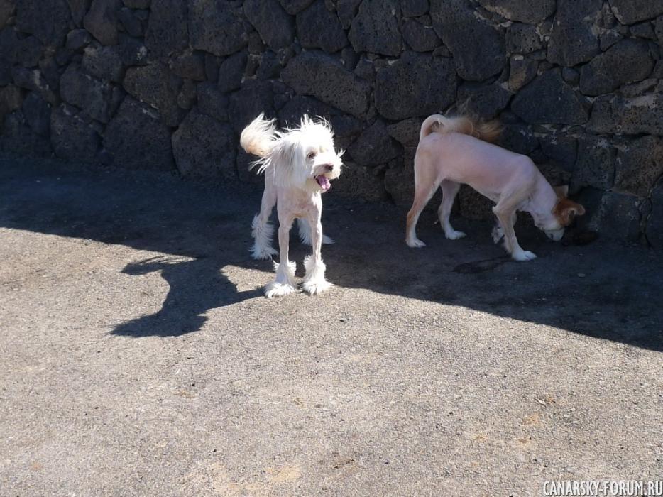 31_El faro de Punta de Jandía.JPG