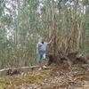 В эвкалиптовом лесу...